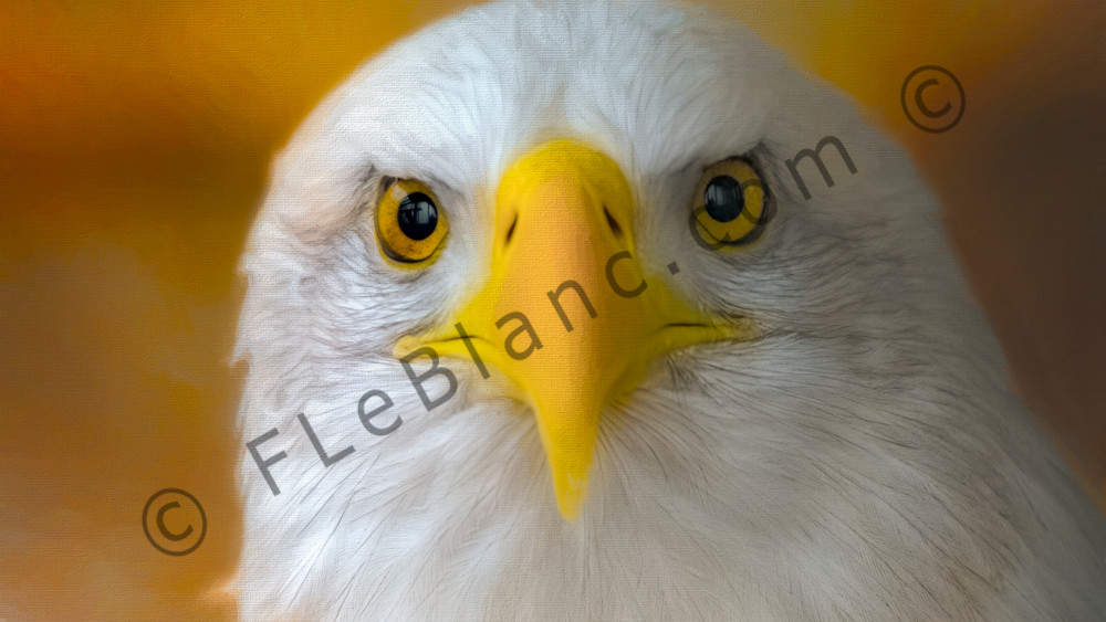 Bald Eagle Hunter Raptor Endangered|Wall Decor fleblanc