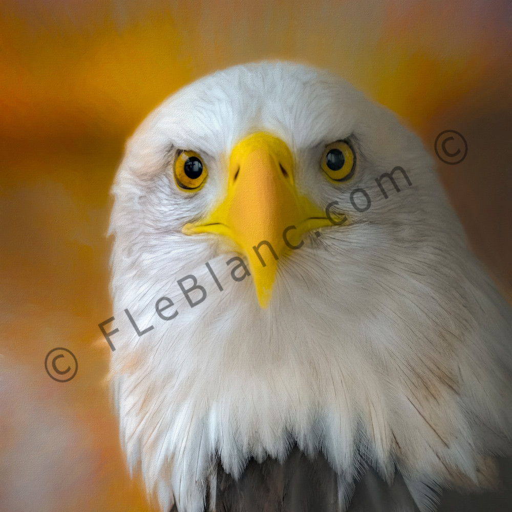 Bald Eagle Hunter Raptor Bird-of-prey|Wall Decor fleblanc