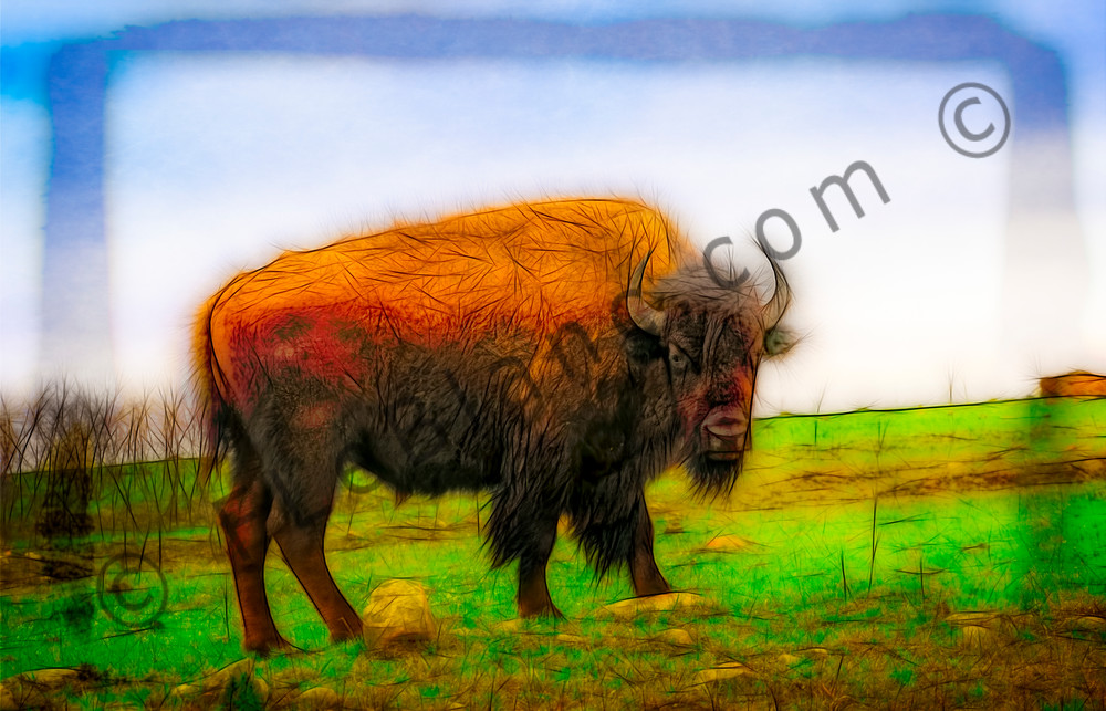 Art Photograph North American Bison v1 fleblanc