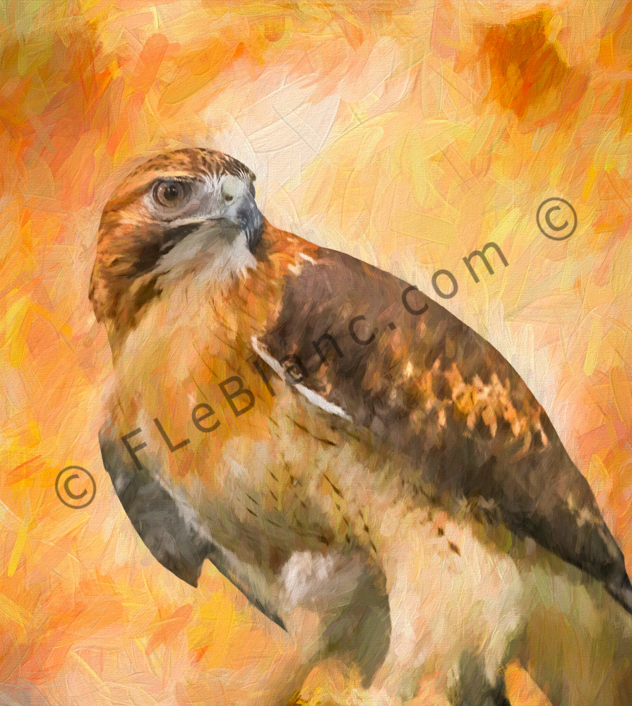 Art Photograph Red Tailed Hawk Painting fleblanc