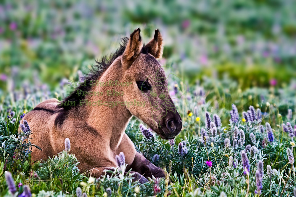 Pryor Mountain Wild Horse Photography Art | Third Shutter from the Sun Photography
