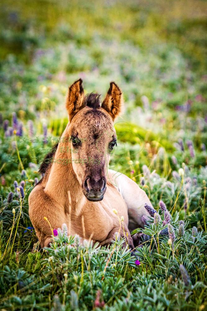 Stare Down - Wild Foal