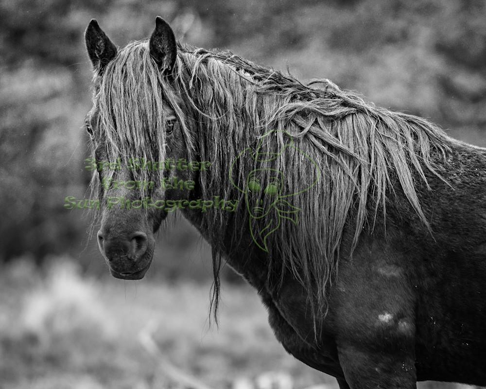 Stallion Guard - Wild Horse