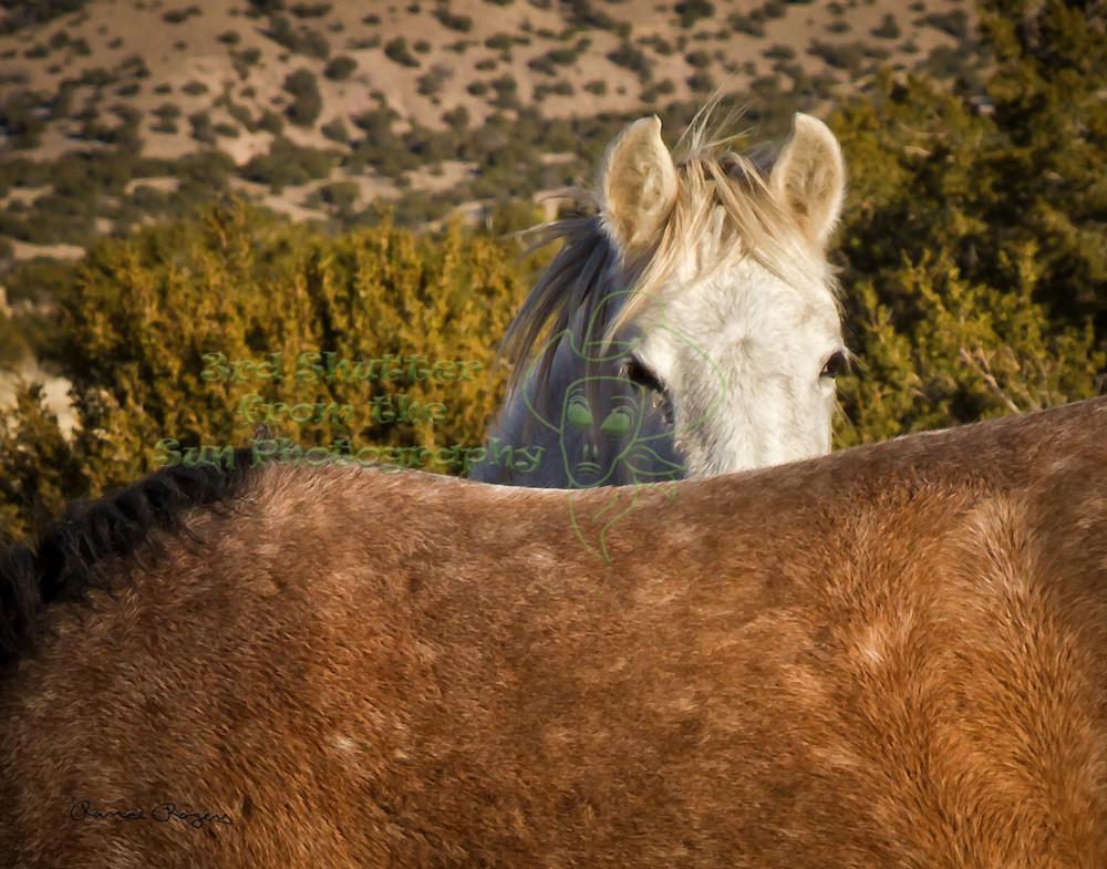 Wild Horse Peek-a-boo