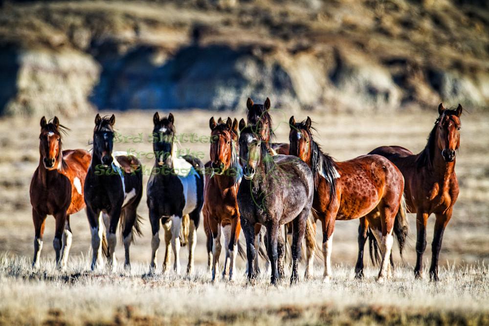 Wild Horse Eyes on You