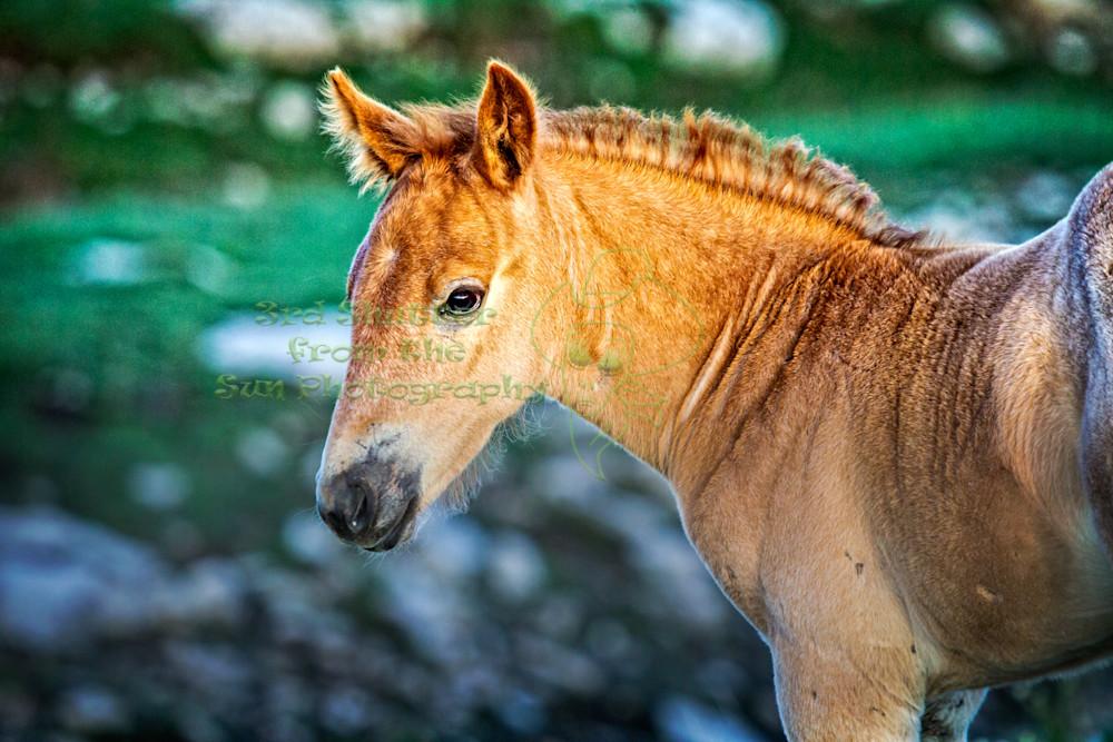 Wild Foal Gaze