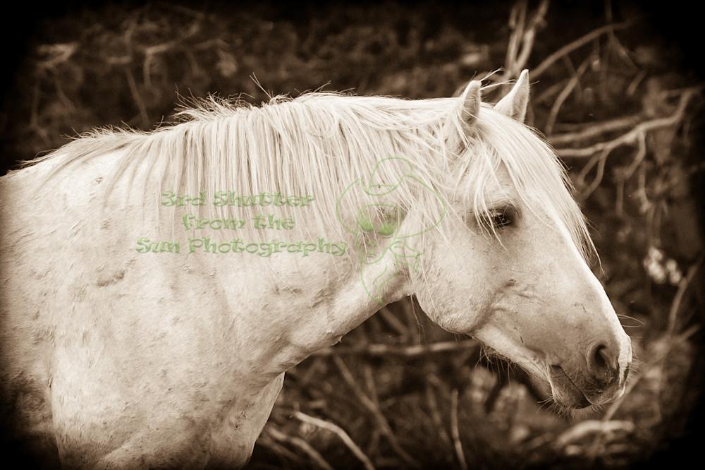 Watchful Cloud   Wild Stallion Photography Art | Third Shutter from the Sun Photography