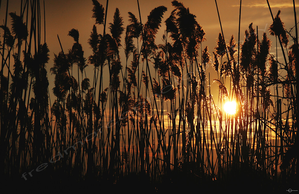 Safe In The Reeds Art | Fred Marco Photography