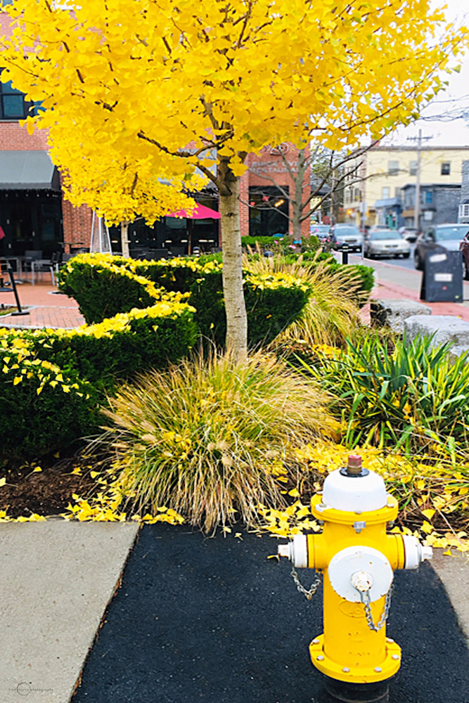 Yellow Tree And Friend Art | Fred Marco Photography