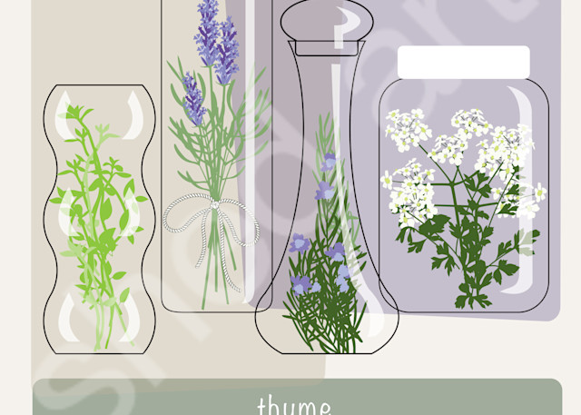 aromatic herbs rosemary thyme lavender parsley