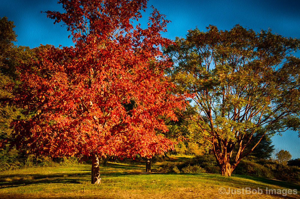 Winterthur Tree Fine Art Photograph | JustBob Images