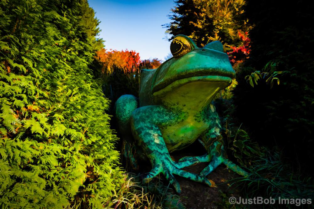 Fredericks Frog Fine Art Photograph   Fredericks Frog