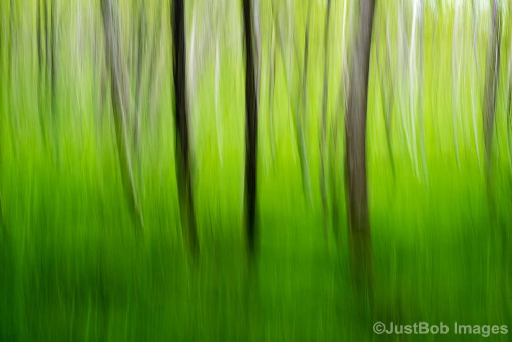 Tree Swipe Fine Art Photograph | JustBob Images