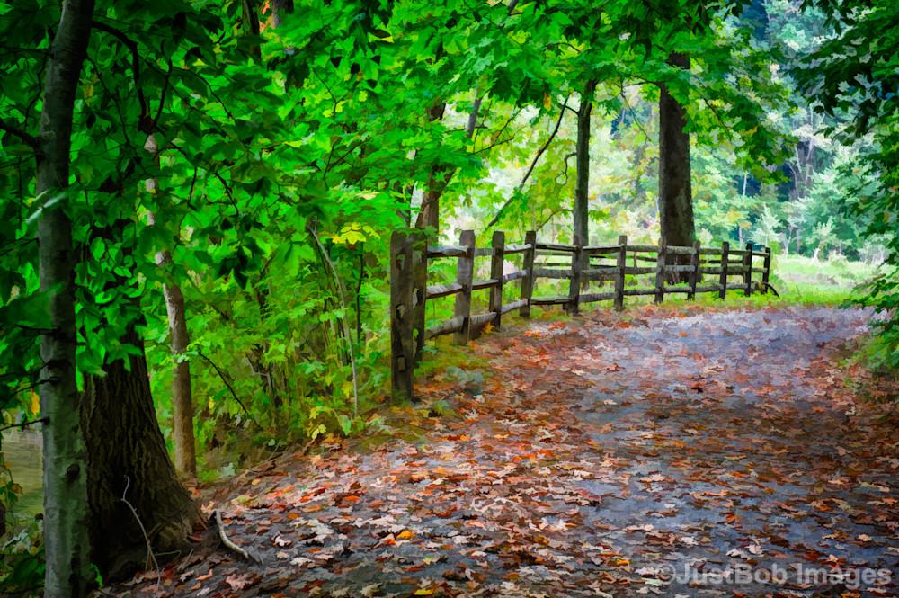 Laurels Pathway Fine Art Photograph   JustBob Images
