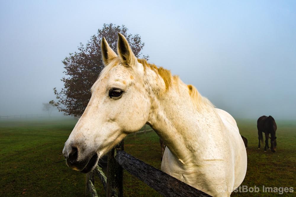 Favorite Horse Fine Art Photograph | JustBob Images