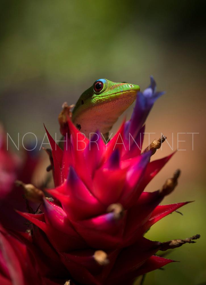 Gold Dust Day Gecko - Noah Bryant