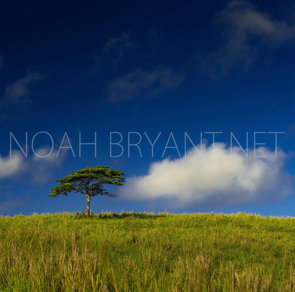 Lonely Tree - Noah Bryant