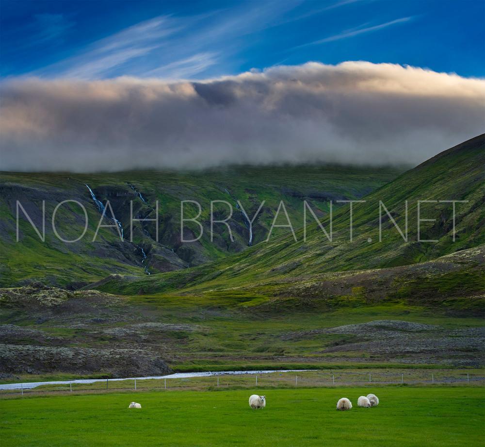 Icelandic Pastureland - Noah Bryant
