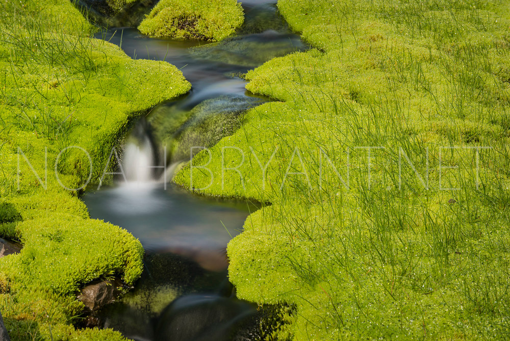 Mossy Stream - Noah Bryant
