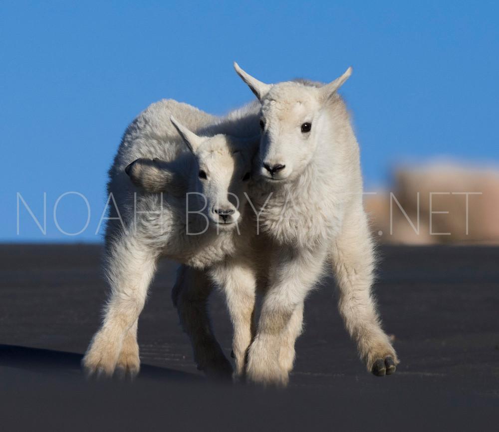 Best Friends - Noah bryant