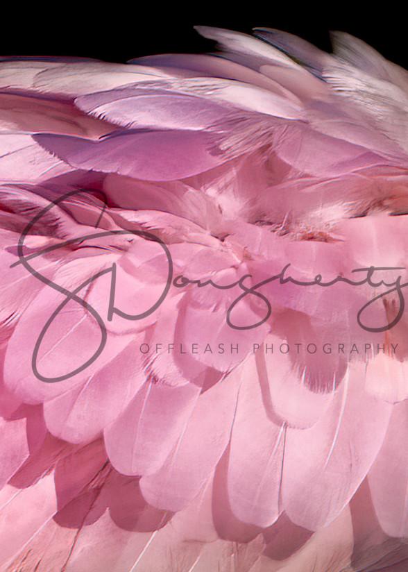 0 P0 A0099 Edit Photography Art   offleashphotography