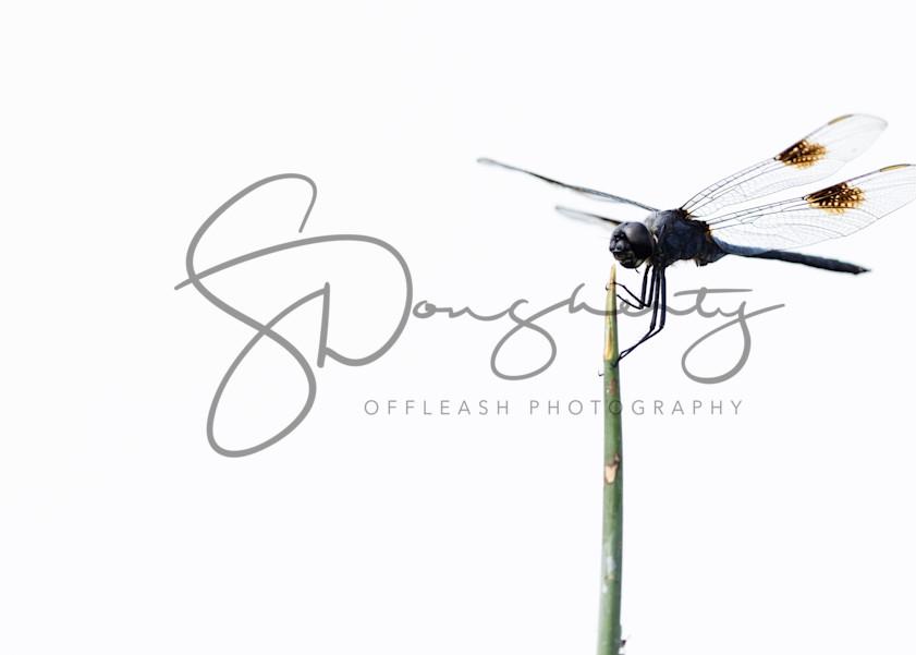 0 P0 A4602 Photography Art | offleashphotography