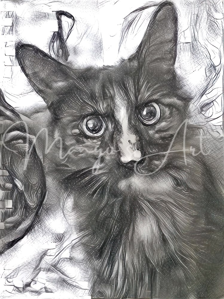 Smoky Kitty Photography Art | MangosArt
