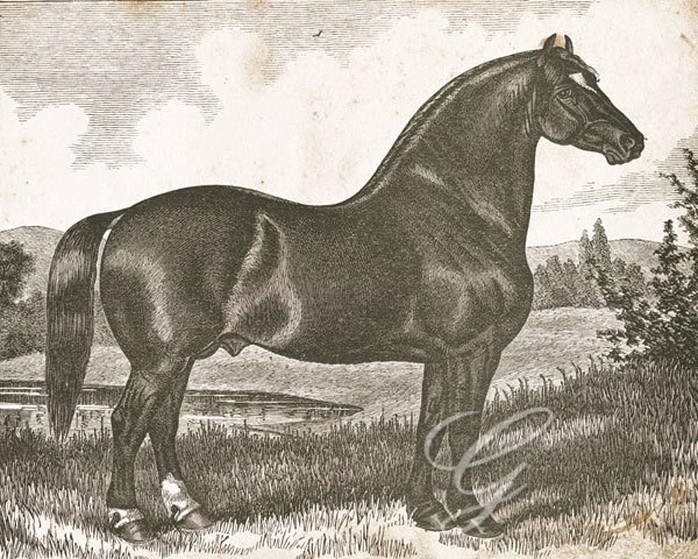 Horse Etching I