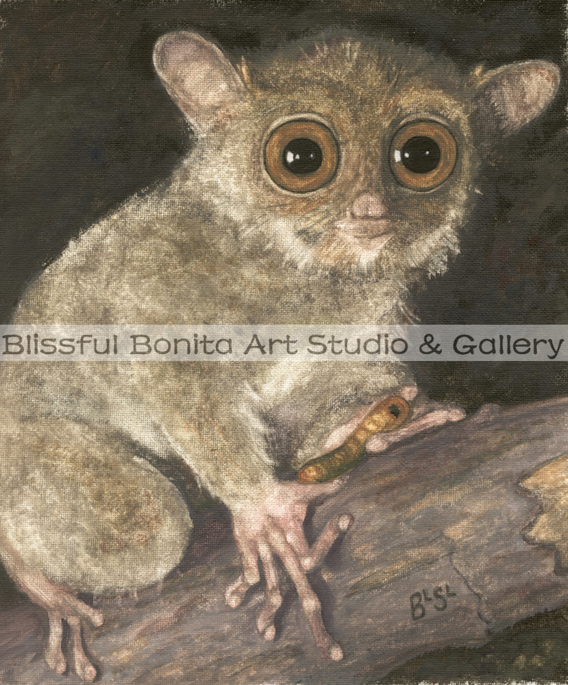 Bush Baby Bright Eyes Art | Blissful Bonita Art Studio & Gallery