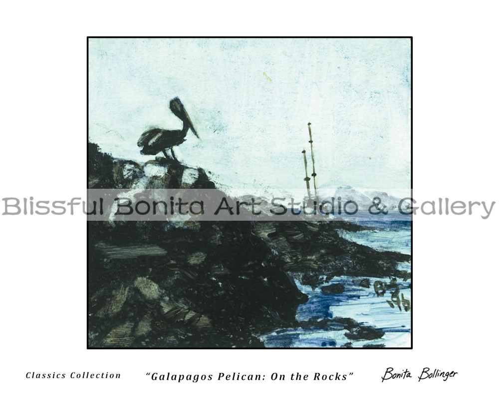 008 Galapagos Pelican   On The Rocks Art | Blissful Bonita Art Studio & Gallery