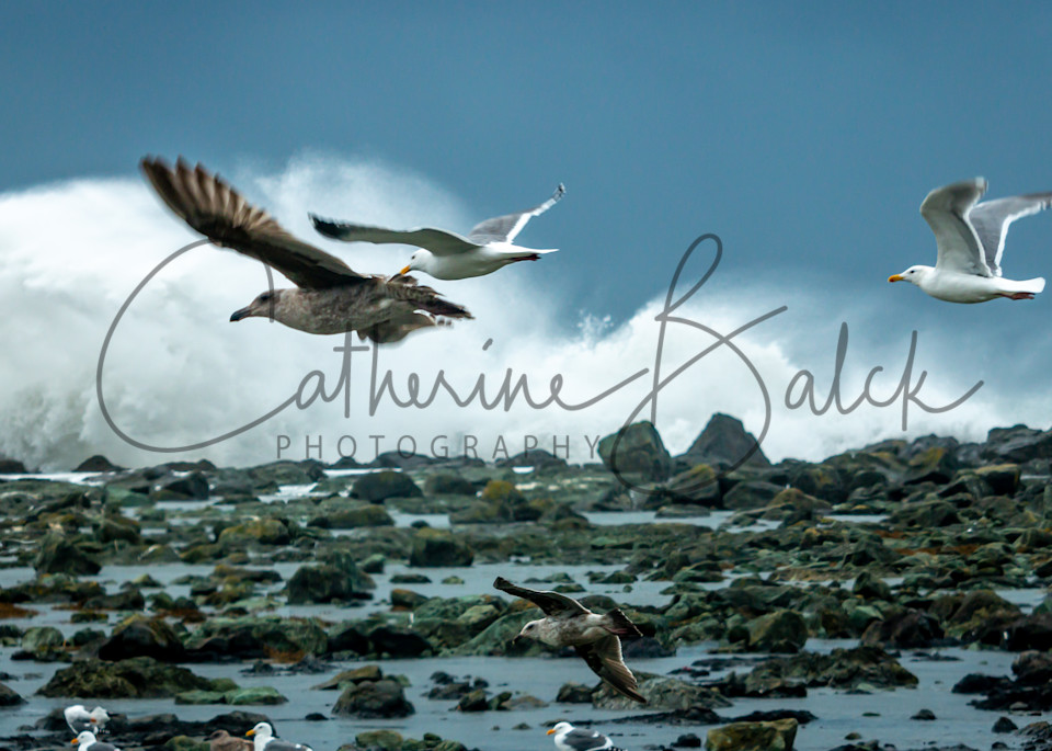 Against The Wind And The Waves Photography Art | Catherine Balck Photography