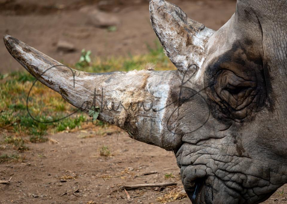 Rhino Wrinkles Photography Art | Catherine Balck Photography