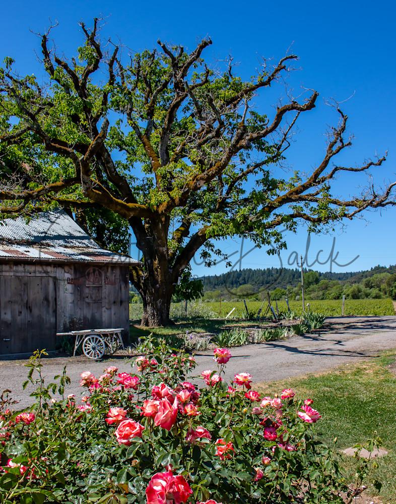 Rural Spring Blooms
