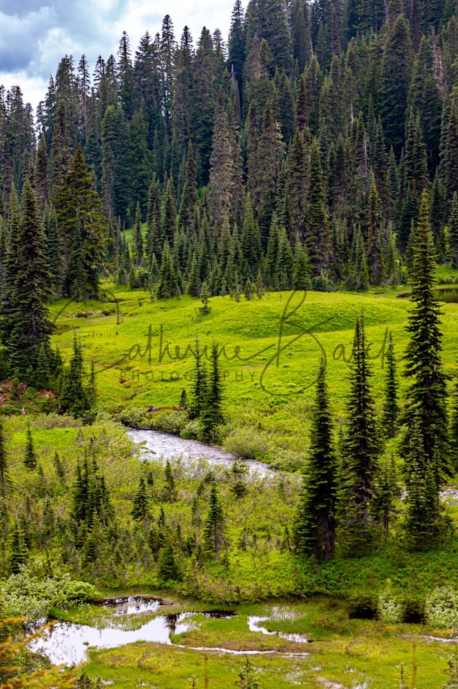 Paradise Meadow, Mount Rainier National Park Photography Art | Catherine Balck Photography