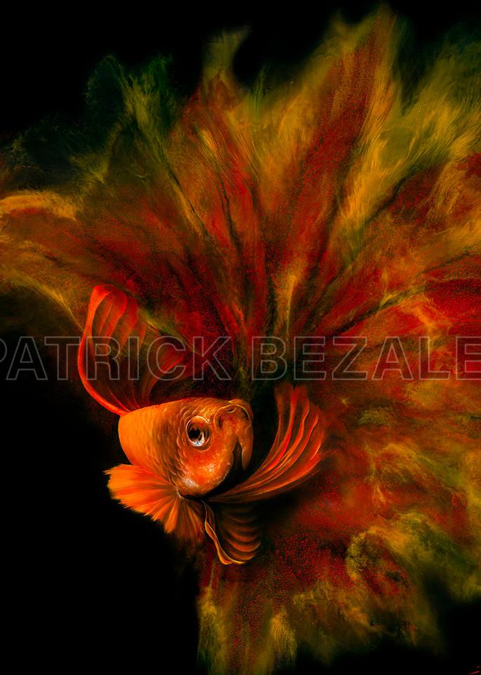Betta Fish Red (Diasec™ Print)  Art   Patrick Bezalel Pte Ltd
