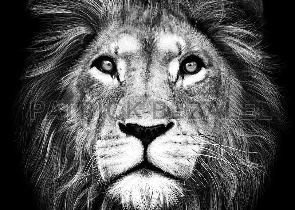 Own Limited Edition Hand-drawn Art Lion of Judah | Patrick Bezalel Fine Artist