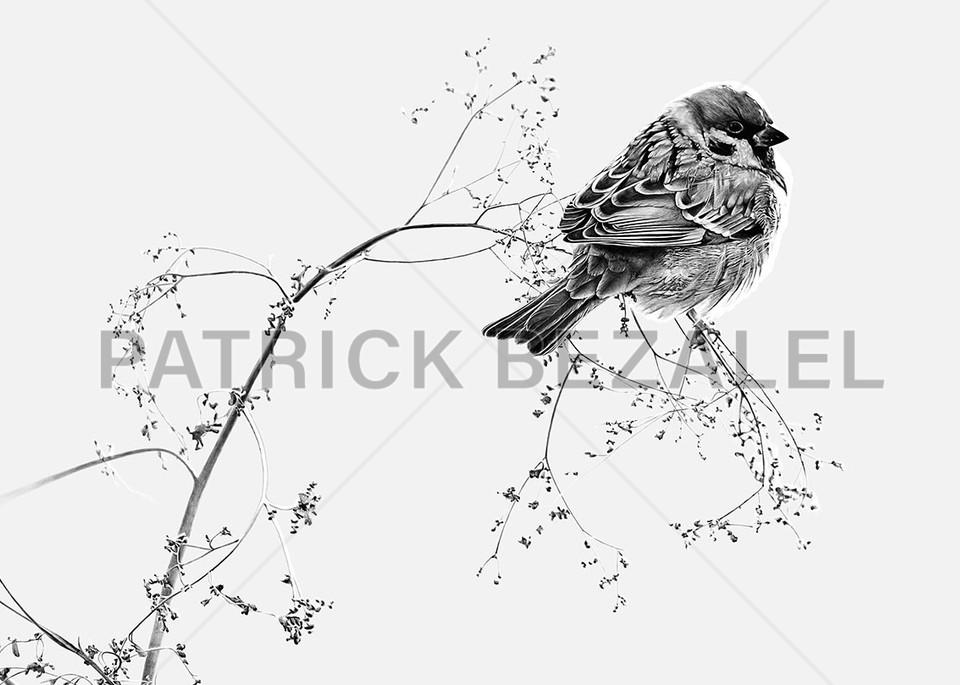 Birds Do Not Worry About Tomorrow   Light Grey (Diasec™ Print)  Art | Patrick Bezalel Pte Ltd