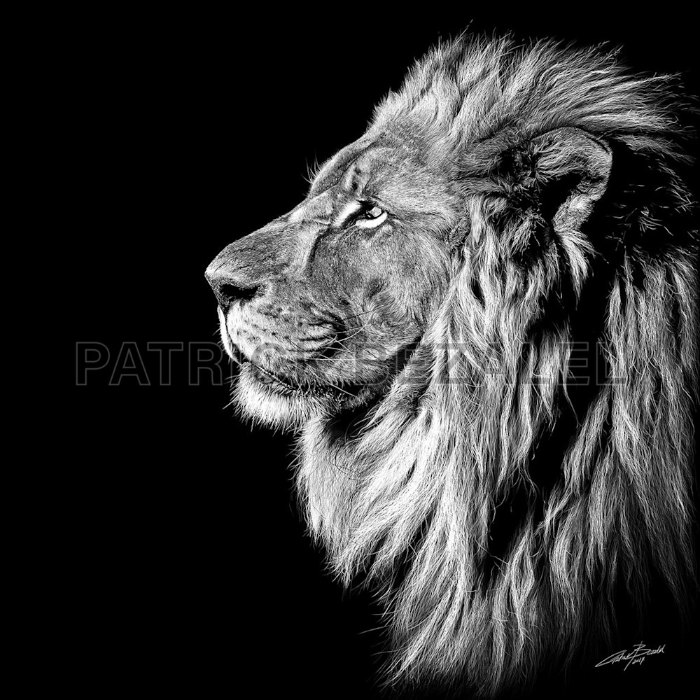 Own Limited Edition Hand-drawn Art King of Kings | Patrick Bezalel Fine Artist