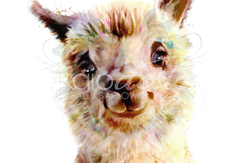 Adorable baby alpaca art painting by Sally Barlow