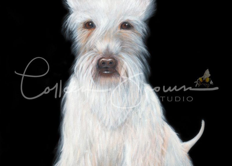 White Scottie by Colleen Brown