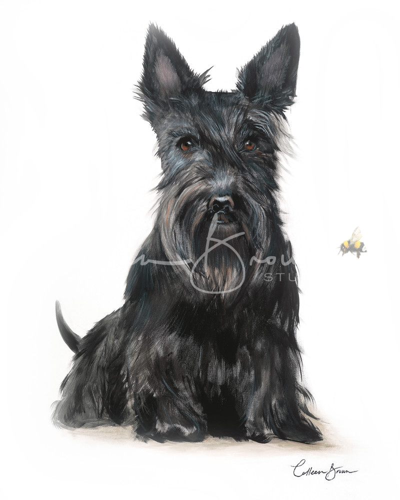 Black Scottie - Open Edition prints