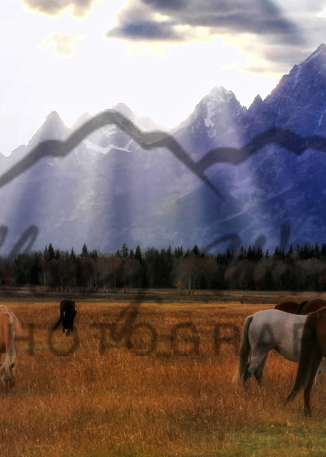 Horses Under the Tetons of Wyoming
