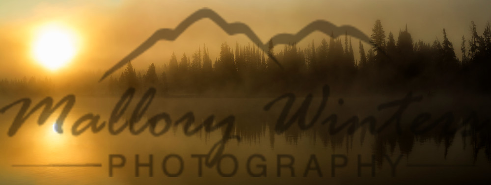 On Golden Pond, Yellowstone River, Yellowstone National Park