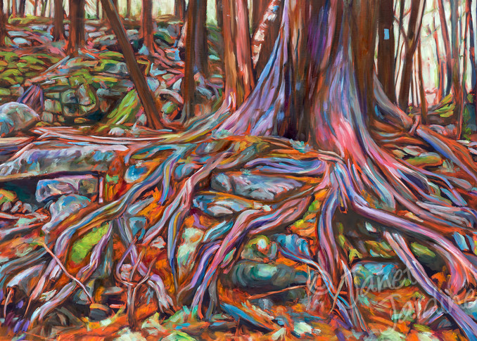 Resilience: fine art prints (gilcée) of original art by Janet Jardine: cedar roots at Hilton Falls Conservation Area, along a side trail of the Bruce Trail