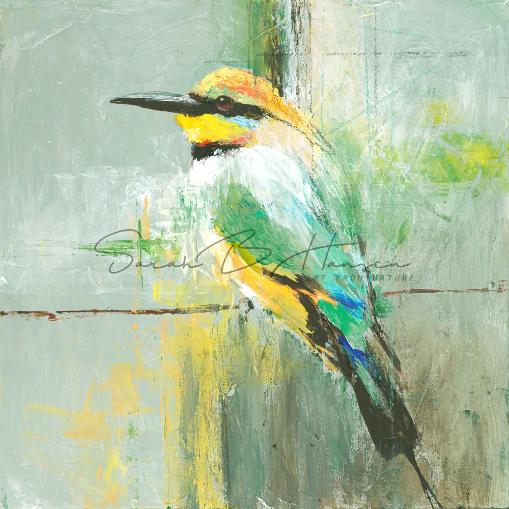 European Bee-Eater, bird art by artist Sarah B Hansen