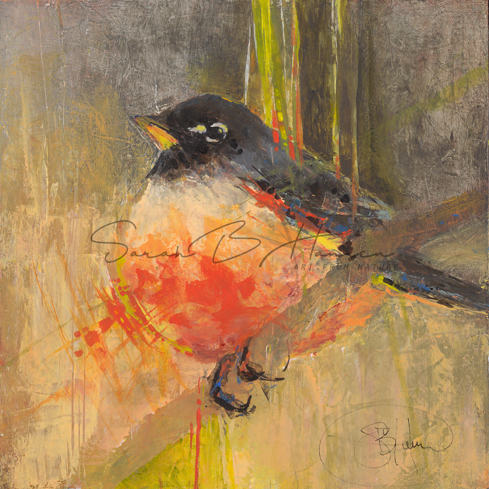 American Robin, bird art by artist Sarah B Hansen