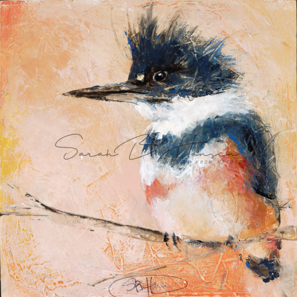 Belted Kingfisher, Original and fine art print by artist Sarah B Hansen