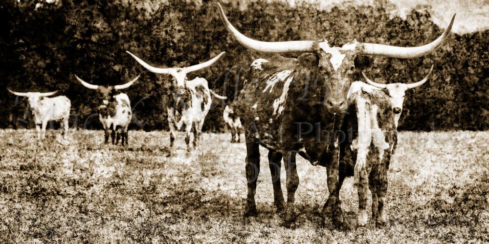 Texas Longhorn Cattle In Sepia Wall Art 5314.51