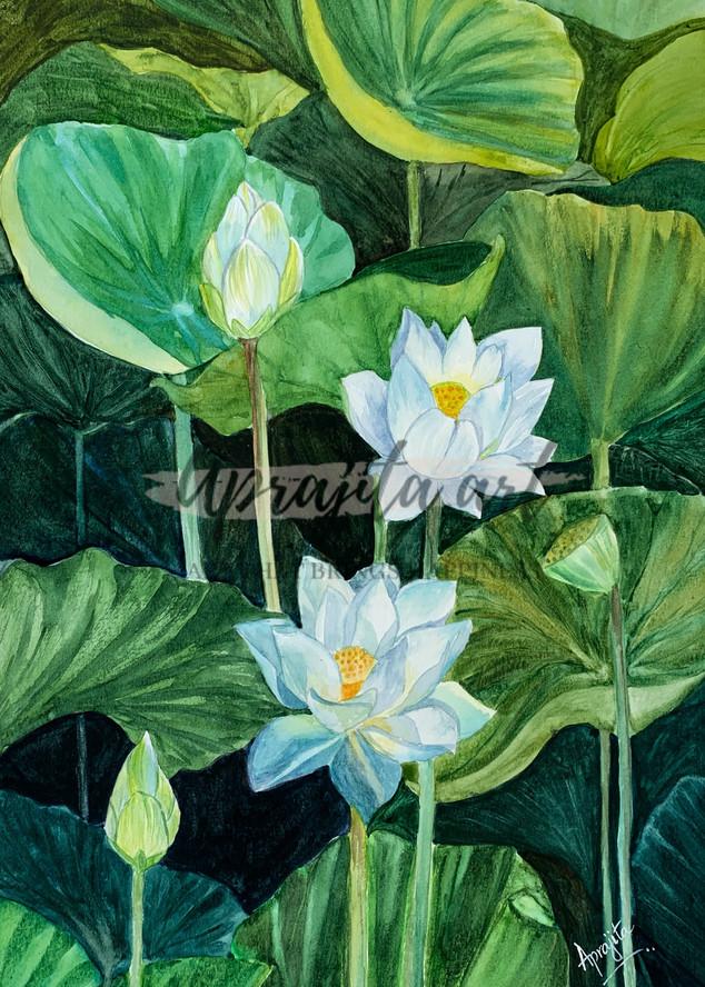 """""""Waterlilies-II"""" in watercolors by Aprajita Lal"""