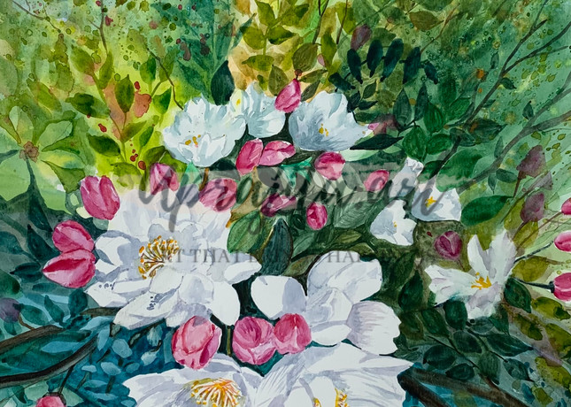 """Cherry Blossom"" in watercolors by Aprajita Lal"